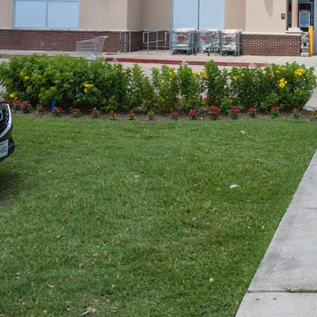 Contact Info For Elegant Lawn Care Inc., (610) 759-0000